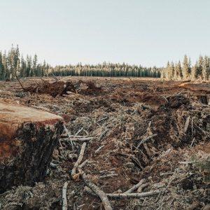 Deforestation, Miller